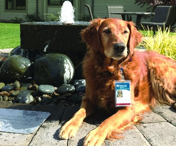 JJ hospice therapy dog