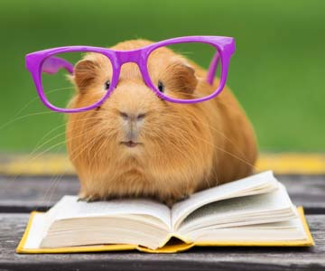guinea pig wearing oversized glasses sitting on an open book