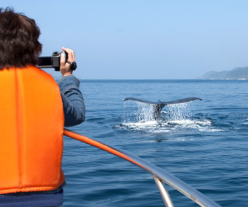 Woman taking a picture on a whale watching excursion.