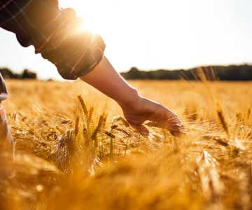 A farmer extends his hand as he walks through the wheat field.