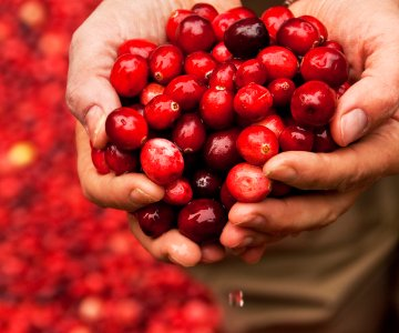 Pick of the Month Cranberries 308 CO