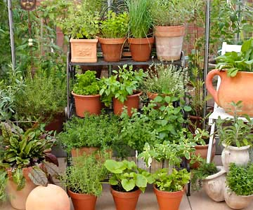 Growing an herb garden can take your cooking up a notch and is fun and easy.