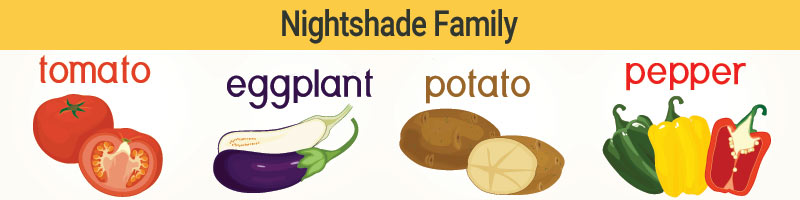 Nightshade vegetables are part of the Solanaceae family, which includes tomatoes, eggplant, potatoes, peppers, and tomatillos.